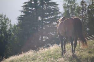 馬のしっぽ・ポニーテール